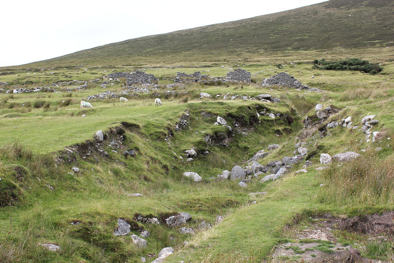 Sheep grazing in the deserted village at the base of Slievemore Mountain